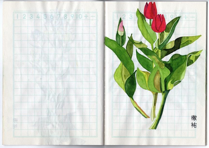 (写真について)ノート(チューリップ)/制作年不詳/水彩絵の具、色鉛筆、鉛筆など