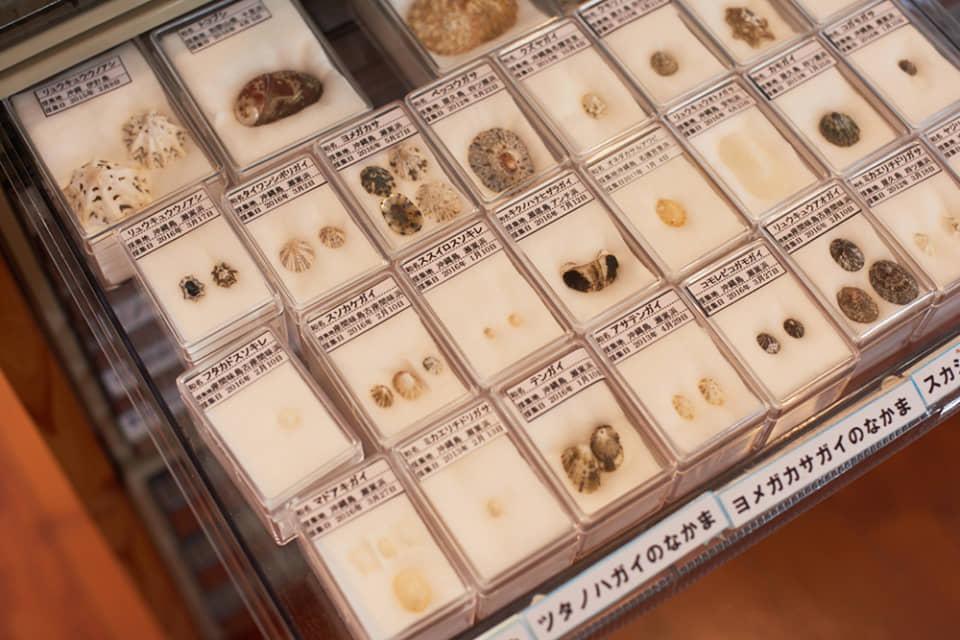 (写真について)1000種以上に及ぶ貝類のコレクション。子どもたちとともに一つひとつ標本にして整理している。