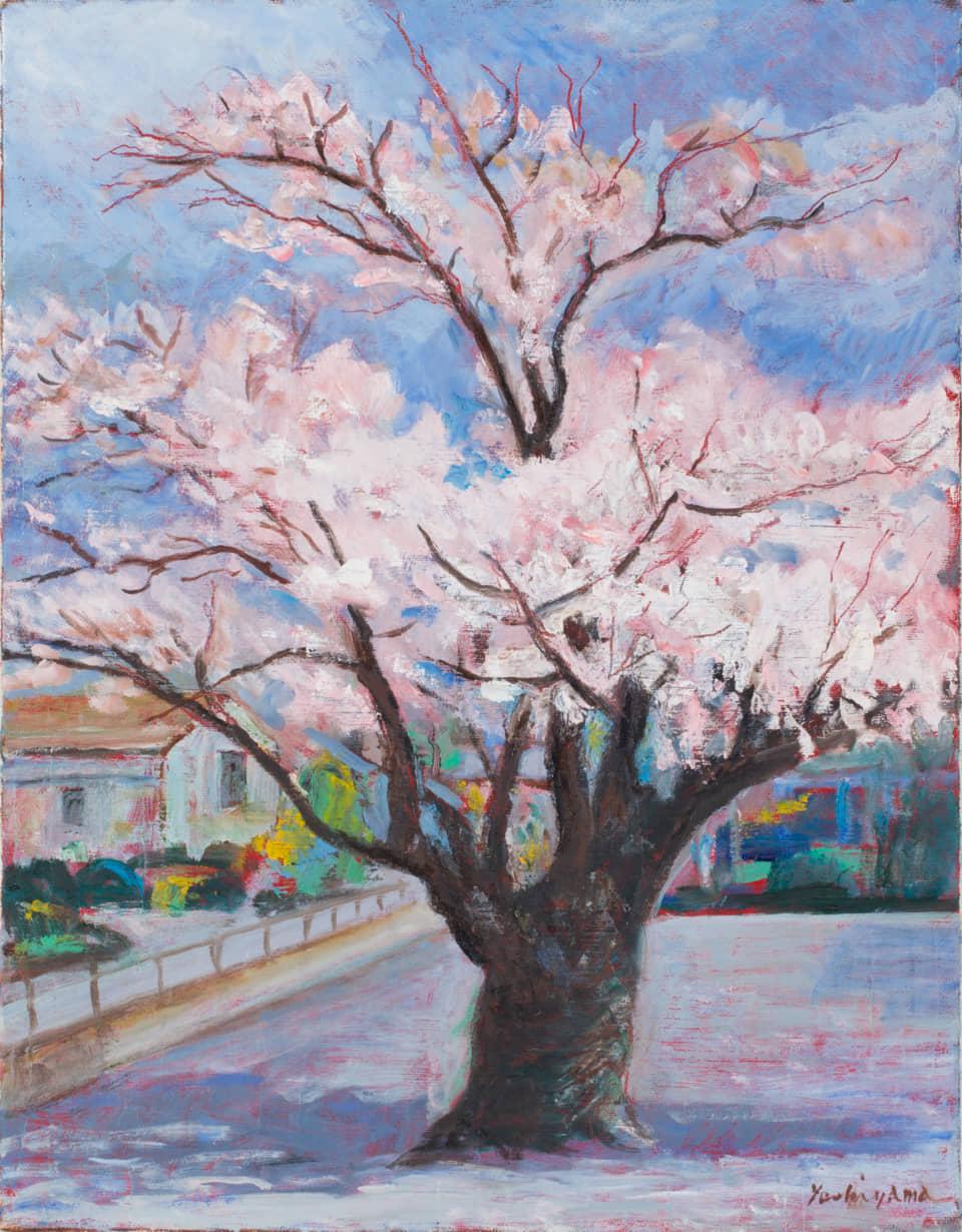 (写真について)吉山安彦(金陽会)《桜》2006