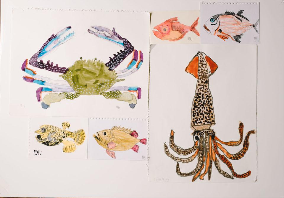 (写真について)海の生物の絵いろいろ。